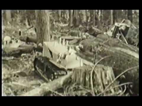 Allison Logging - Coastal Logging in the early 20th Century