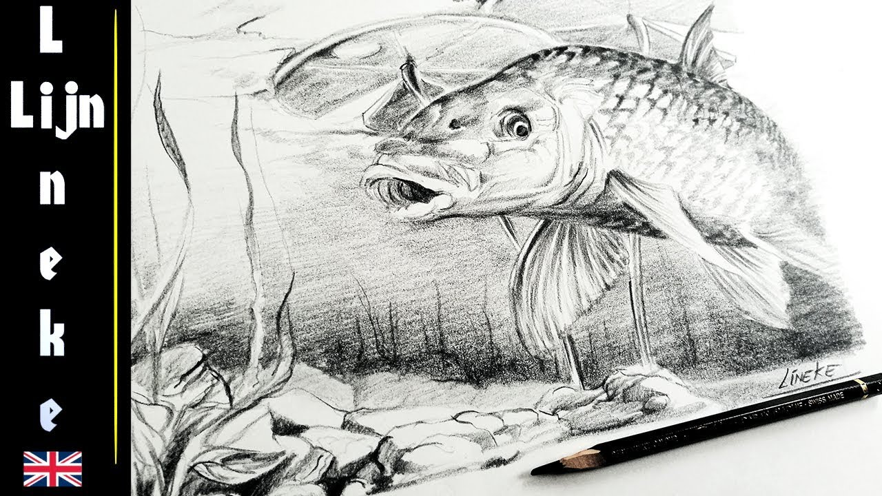 Easy carp fish for beginners graphite pencil drawing
