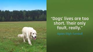 Dogs' lives are too short