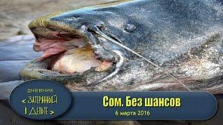 Рыбалка на Волге. Астраханский гигантский сом(Приветствую подписчиков и гостей канала! сайт базы http://fora-fish.umi.ru/ мы в ВК https://vk.com/bazaforafish отзывы на РФ http://www.ru..., 2016-04-13T15:22:32.000Z)