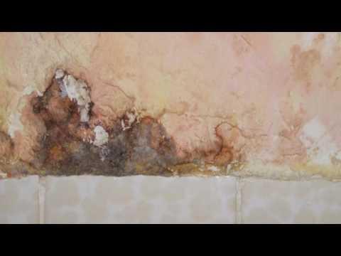 Mold | Toledo, OH – Toledo Basement Repair