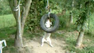 Sako Bull Terrier Mon Jeu Favori !!! 4 Chien,pitbull, Dog, Bullie, Power