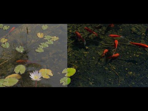Circular Polarizer  Filter - effect on video