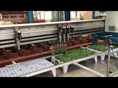 Robotics and automation in Dutch horticulture