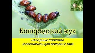 видео Как извести колорадского жука