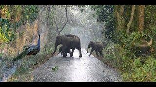 Chilapata Forest Tour - Jungle Safari | Weekend Trip | Buxa Tiger Reserve - Jayanti |  North Bengal