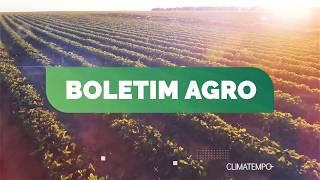 Boletim Agro - Veja como a chuva vai influenciar a agricultura nesta semana