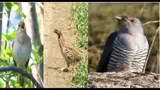 Beethoven - 6th Symphony birdsong-sequence with images