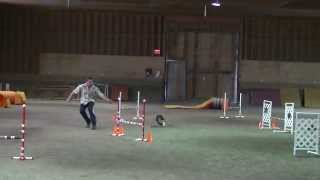 Shayla Dog Agility Master Jumpers At Avid Aac Trial On Sept 22 2013