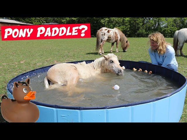I bought my ponies a PADDLING POOL!