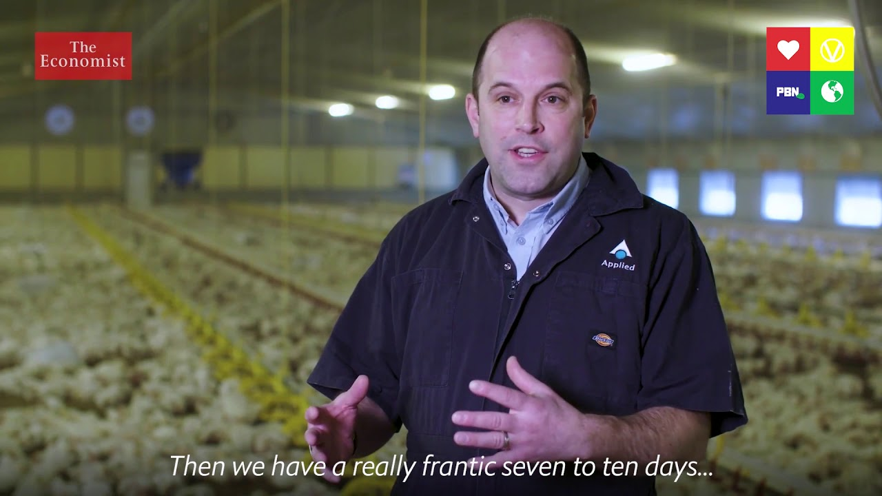 The Truth About Chickens [NON GRAPHIC]