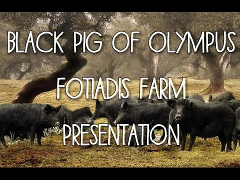 Meat history-meet history (english)/ Greek Black Pig,Fotiadi's Farm