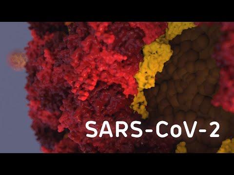 Coronavirus SARS-CoV-2 Structure