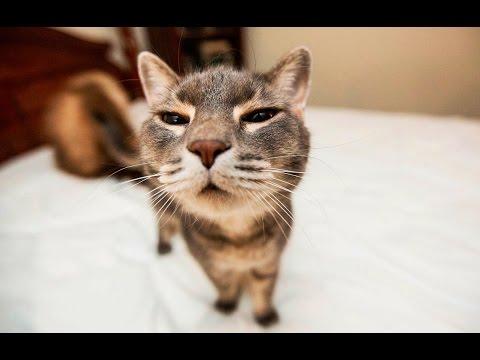 Katzen lustige und witzige