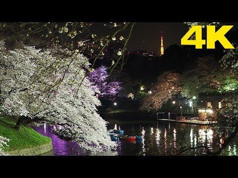 TOKYO.| 千鳥ヶ淵 桜.| Chidorigafuchi SAKURA 2018. [4K]