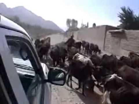 афганские песни Видео! - -Видео сёрфинг