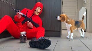 Dogs Vs Burglar Prank : Funny Dogs Louie and Marie
