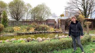 Русская ива. Видео-обзор. Экскурсия по нашему участку: разноцветные деревья, изгородь и беседка.