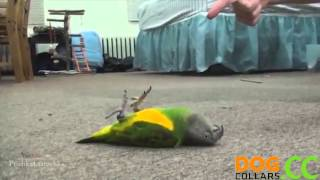 Funny Video Different Animals Different Types Of Playing Dead After Finger Shot[HD]