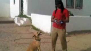 Abdullah Minor teach the dog تعليم الكلب الجزء الأول
