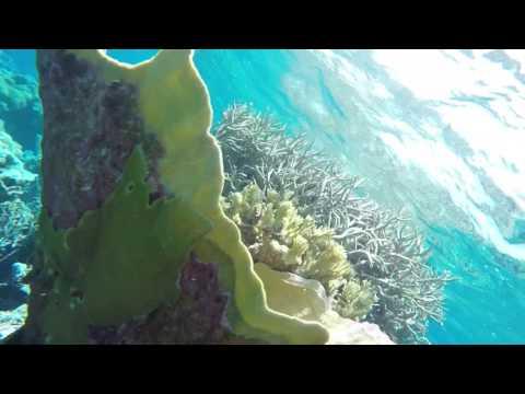 Palmyra atoll snorkeling. Round 2