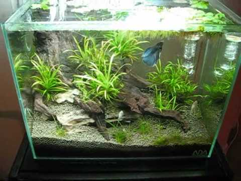 3g ada aquarium ver 2 youtube for Ada fish tank