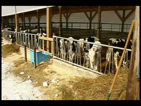 Lazy J - Calf Barn