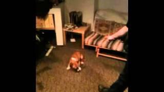Stupid Dog Tricks Thumbnail