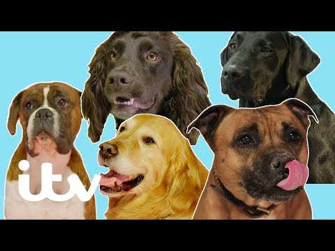 Britain's Top 100 Dogs 2019 | The Top Five Favourite Dogs | ITV