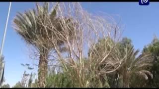 أهمية الغطاء النباتي - محافظة معان