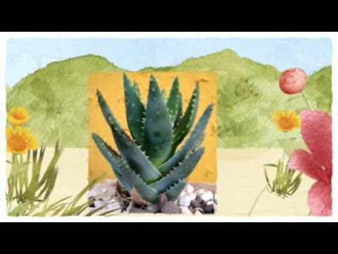 Superfood Series Volume 2; Acai Berries, Aloe Vera, Phytoplankton, Coconut Products & Hemp Seeds