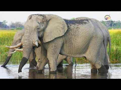 لن-تصدق-!!!-أعلى-الأصوات-في-مملكة-الحيوانات-top-10-loudest-animals-in-the-world