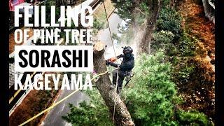 Felling of Pine Tree / Bulldog Bone / 2xBola Lanyard / Captain Hook / GoPro
