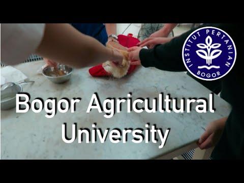 Visiting Bogor Agricultural University and the Botanical Gardens