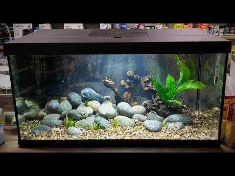 Your New Aquarium The Fishroom