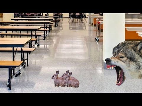The School for Placental Mammals