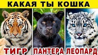 Тест! КАКАЯ ТЫ КОШКА? Какой ты Хищник из Семейства Кошачьих? Невероятный тест на ХАРАКТЕР. Точность
