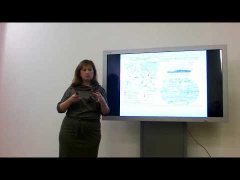 Видеоурок по географии «Австралия. Географическое положение и история исследования»