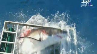 بالفيديو.. سمكة قرش بالمكسيك تحاول التهام غواص ولكنه ينجو بمعجزة