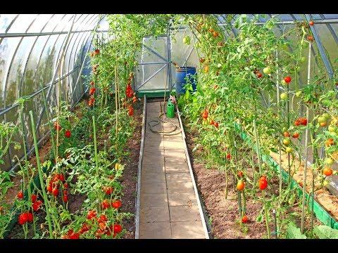 Gardening Vegetables - The Best Vegetables For Garden Beginners | Home Garden Vegetables