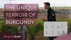The Unique Terroir of The Burgundy Wine Region
