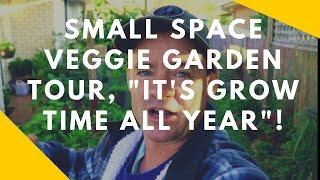 Productive Small Space Urban Vegetable Garden Update