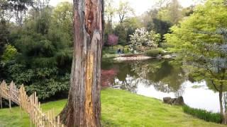 Вроцлав. Японский сад. Празднуем в прогулке:)