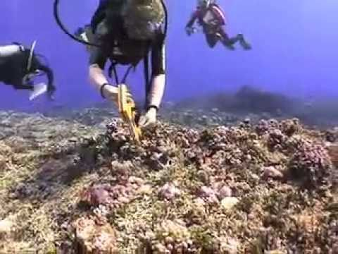 """Canary is Dead"" - Coral Reefs & Global Warming"