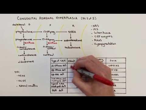 Congenital Adrenal Hyperplasia (CAH) - 2 Of 2