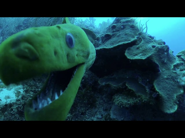 KISSED BY A GREEN MORAY EEL - LOOK INSIDE THE MOUTH OF THE MORAY - CRAZY MOMENT