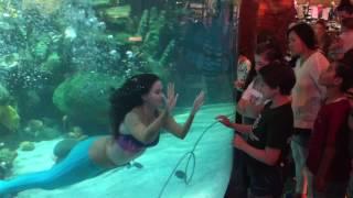 Mermaid Show - Silverton Casino Las Vegas