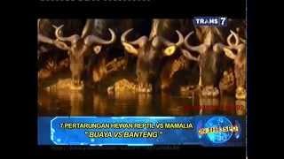 Video On The Spot - 7 Pertarungan Hewan Reptil VS Mamalia download MP3, 3GP, MP4, WEBM, AVI, FLV November 2018