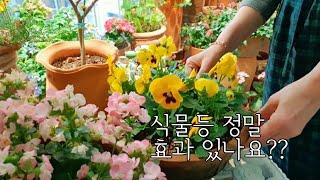 식물등으로 봄같은 실내정원/ 식물등의 효과/식물생장등/…