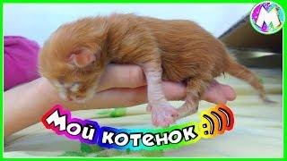 Новый питомец Мой котенок Нашли на улице / Как вырастить новорожденного котенка / Вместе с Машей